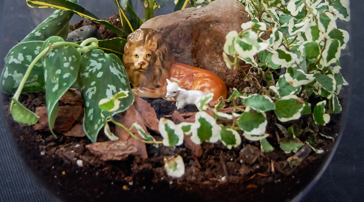 Life Behind Glass: Easy to Create Terrarium